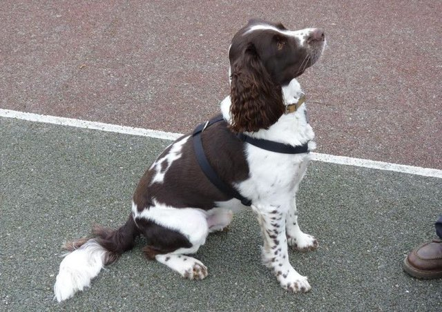 Dog dies after being impaled on spike at popular walking