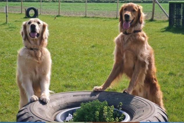 Satisfied customers at Odin Valley Dog Park in East Boldon.