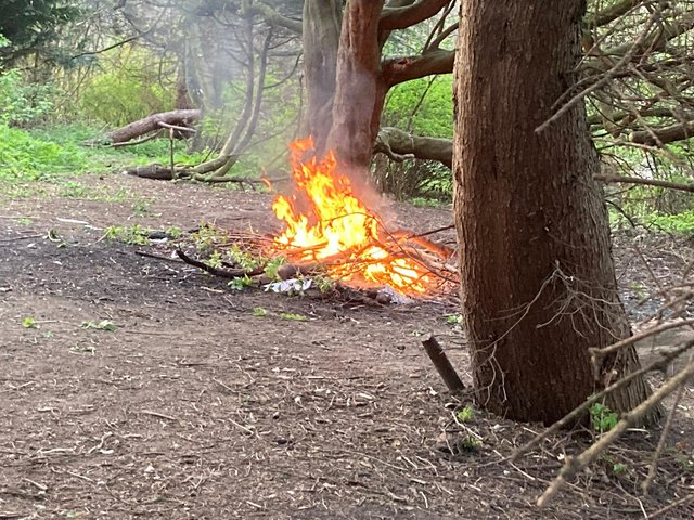 Concerned members of the public called Tyne and Wear Fire and Rescue Service to report after spotting teenagers collecting logs to add to bonfire set up in the woodland of South Marine Park in South Shields.