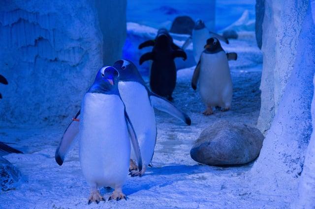 Penguins at the London Sea Life Aquarium