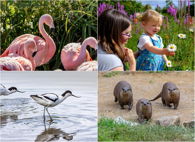 Washington Wetland Centre on Wearside plans to re-open on  Monday, April 12. Pictures from WWT.