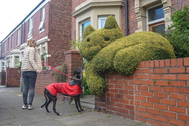 The impressive cat hedge in North Shields
