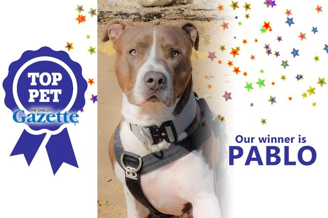Pablo is the winner of our Top Pet competition!
