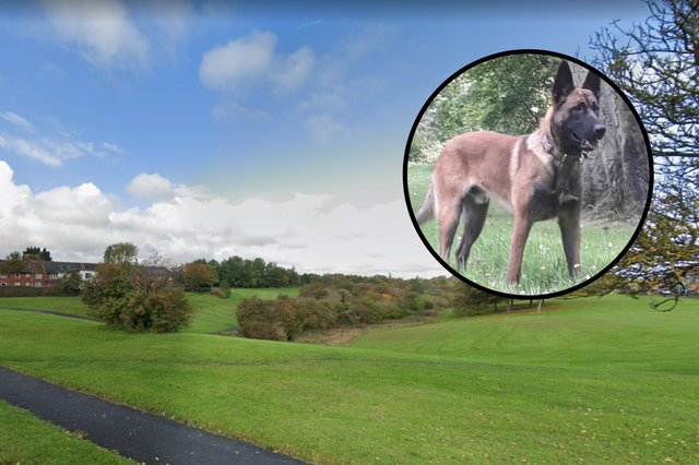 Alfie, a 16-month-old Belgian Malinois, worked with handler Pc Stephen Henry to track down the missing woman after she was seen near Calf Close Burn in Jarrow. Images copyright Google/Northumbria Police.
