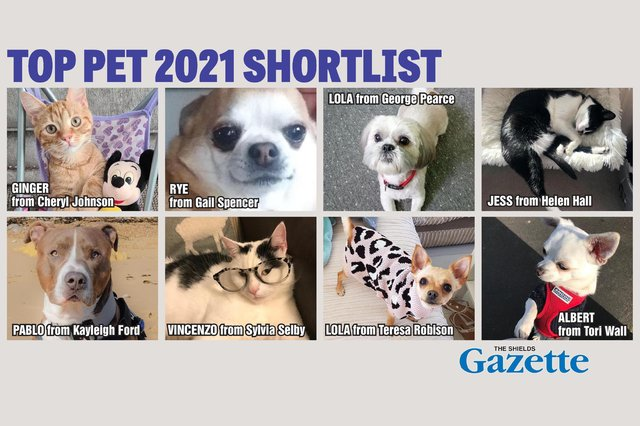 Who'll get your vote to be crowned the Shields Gazette Top Pet champion?