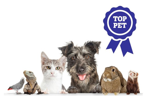 Is your pet a star? It's time to enter them into our Top Pet competition.