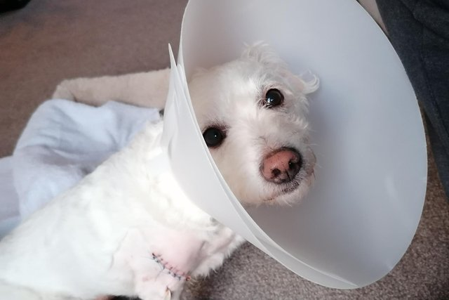 Brett Walker's rescue dog, Rascal, was left with serious injuries after a vicious attack at the Quayside