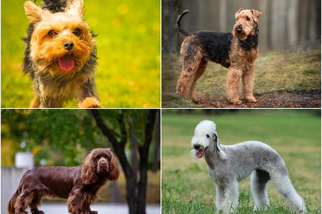 These are the prices of 11 breeds of dogs, according to Pets4Homes